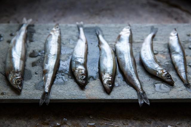 sardines-5 (1)